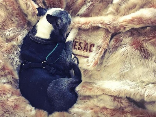 Lovesac Dog Bed, the Trendiest Bed You Can Give to Your Dog